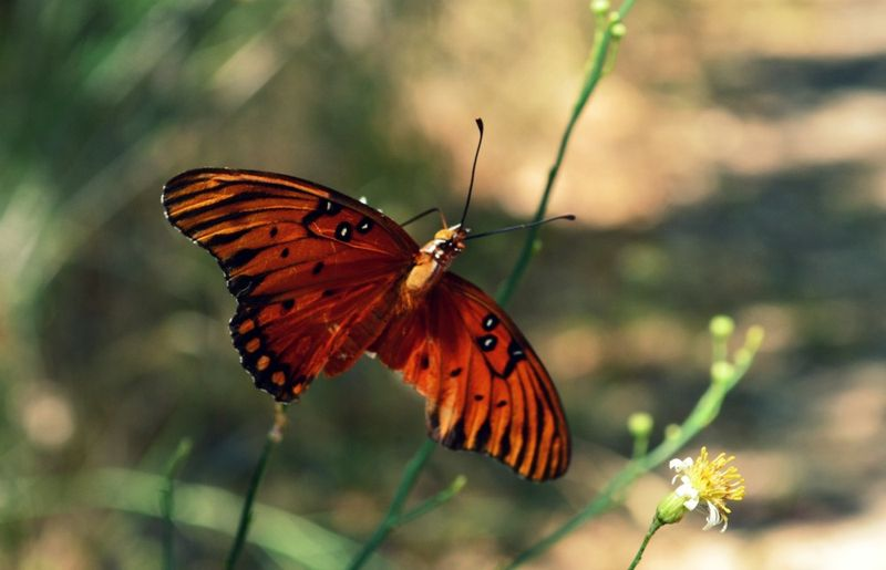 _butterflybroken