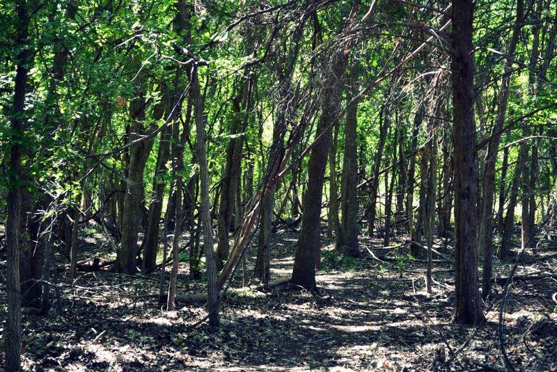 _trees