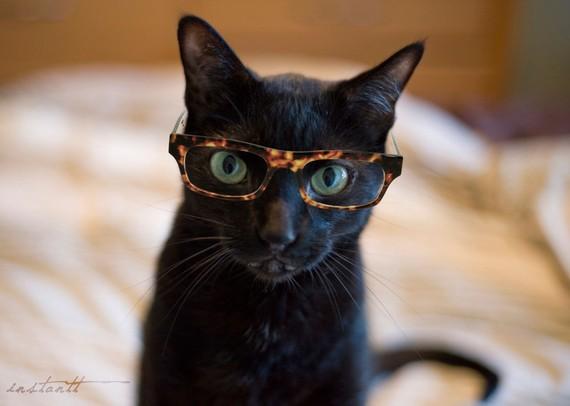 _catinglasses-instantt