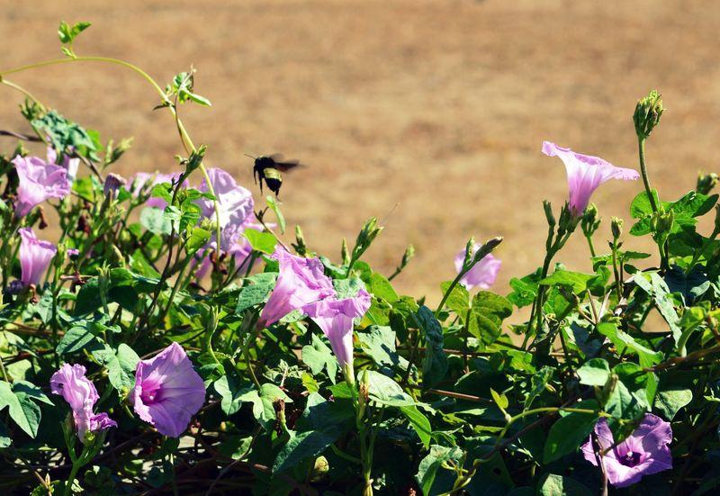 _bumblebee500