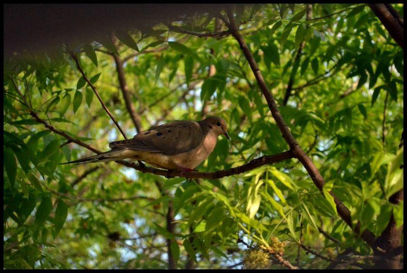 Peepingbird